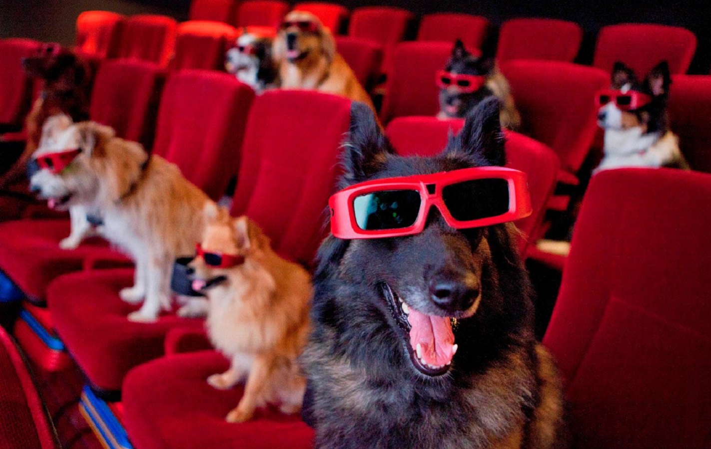 film sui cani - pills of movies