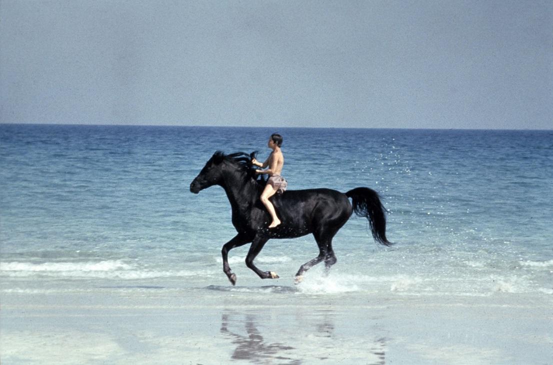 black stallion film con cavalli
